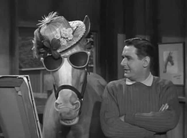 He Was A Bit Of A Diva ... is listed (or ranked) 3 on the list The Inexplicably Strange History Of Mr. Ed The Horse