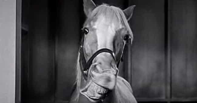 A Trick String Was Behin... is listed (or ranked) 4 on the list The Inexplicably Strange History Of Mr. Ed The Horse