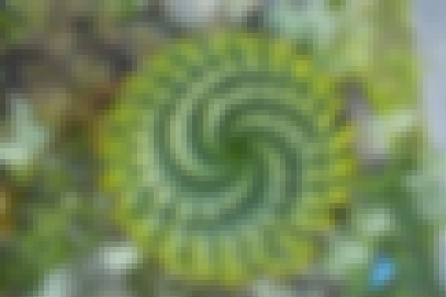 This Super Spirally Succulent is listed (or ranked) 1 on the list 25 Stunningly Beautiful Fractals That Occur In Nature