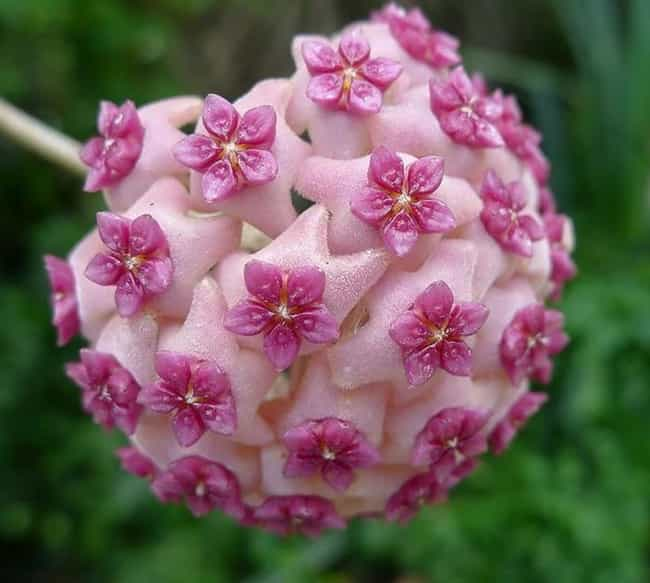 Fractals Make The Hoya Aldrich... is listed (or ranked) 4 on the list 25 Stunningly Beautiful Fractals That Occur In Nature