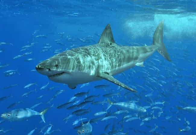 Sharks Use Electric Fields To ... is listed (or ranked) 2 on the list 14 Beyond Fascinating Facts About Sharks That Most People Don't Know