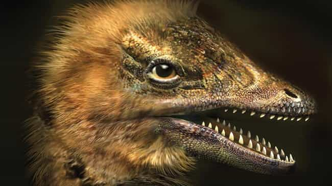 Don't Worry - They Aren't Hatc... is listed (or ranked) 3 on the list Thanks, Science! Scientists Engineered A Chicken To Have A Dinosaur Face