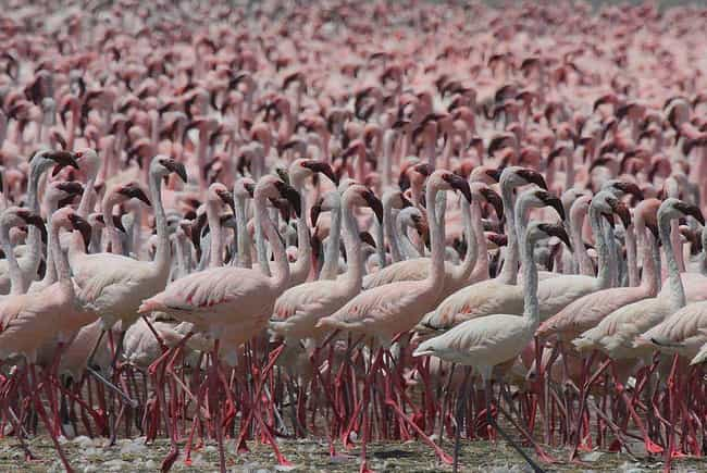 One Flamingo Is Living P... is listed (or ranked) 2 on the list The Wildest Zoo Animal Escapes Of All Time