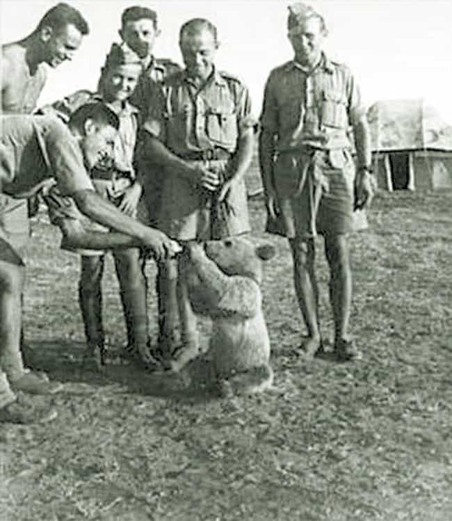 Wojtek's Mother Was Killed By ... is listed (or ranked) 1 on the list The True Story Of Wojtek - The Bear That Served In The Polish Military