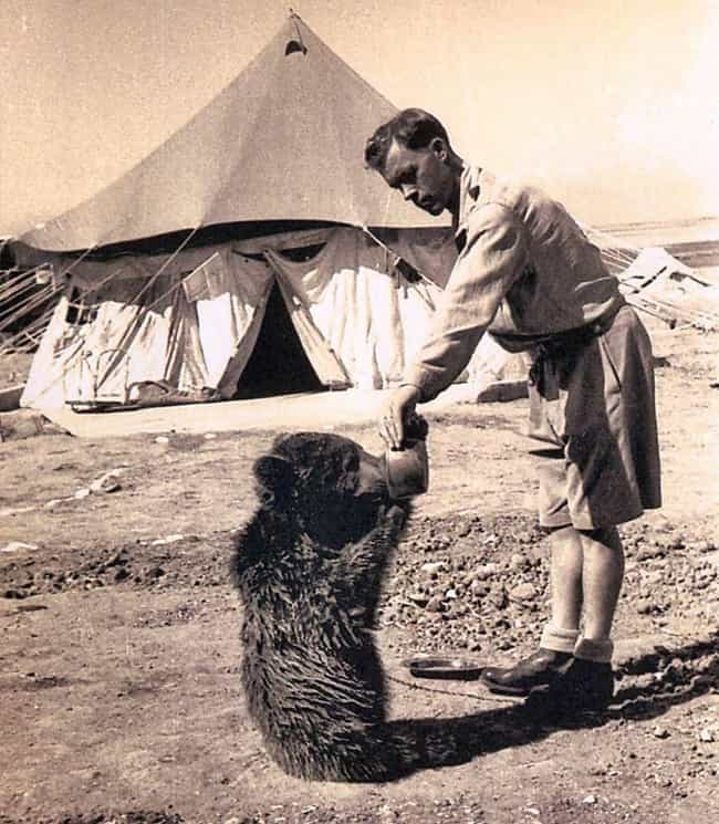 Wojtek Was Raised On A Bottle ... is listed (or ranked) 2 on the list The True Story Of Wojtek - The Bear That Served In The Polish Military