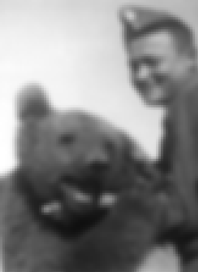 Wojtek Was A Drinker And A Smo... is listed (or ranked) 4 on the list The True Story Of Wojtek - The Bear That Served In The Polish Military