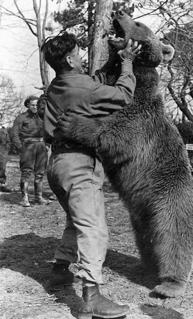 There Was Always Time For Leis... is listed (or ranked) 3 on the list The True Story Of Wojtek - The Bear That Served In The Polish Military