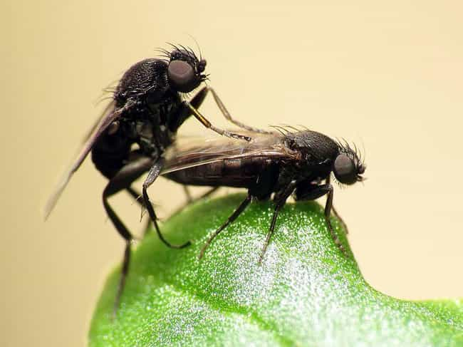 Leafcutters Can Be Zombi... is listed (or ranked) 2 on the list 14 Crazy Awesome Facts About Leafcutter Ants, Some Mad Resourceful Insects