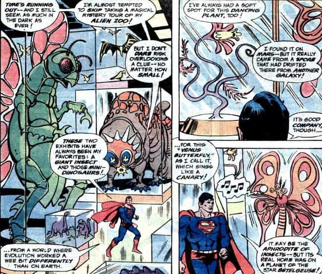 An Alien Zoo is listed (or ranked) 2 on the list All The Most Insane Things In Superman's Fortress Of Solitude