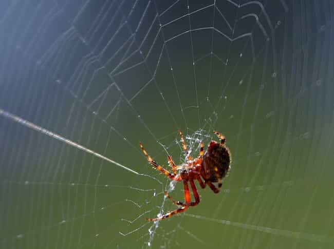 Spiders Can Measure Their Prey... is listed (or ranked) 1 on the list 13 Crazy Ways Animals Have A Sixth Sense