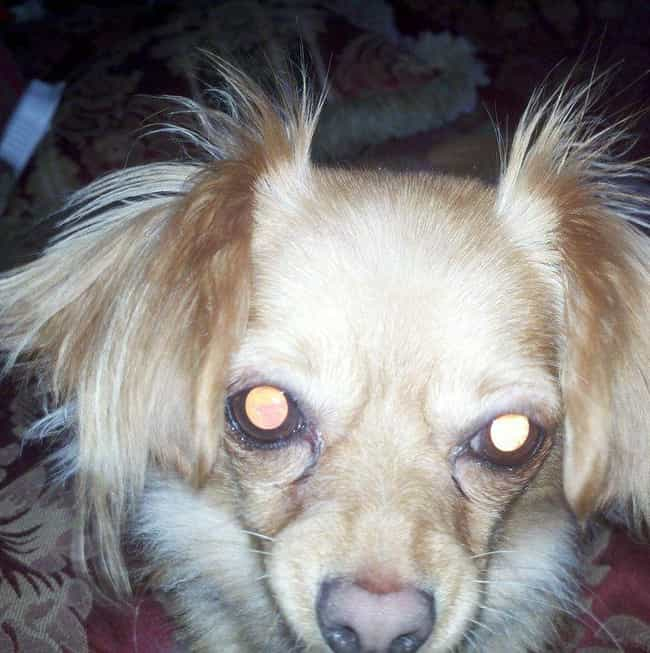 It Regards Certain Space... is listed (or ranked) 3 on the list 12 Spooky Signs Your Pet Might Be Clairvoyant