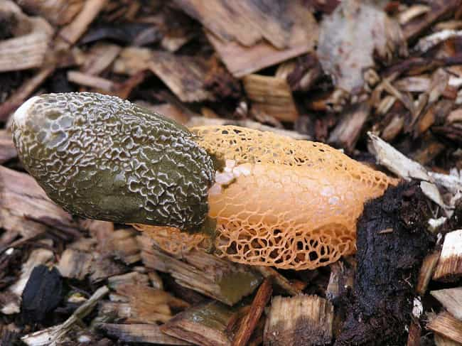 The Scent Of One Fungus ... is listed (or ranked) 2 on the list 12 Utterly Bizarre Effects That Plants And Fungi Can Induce