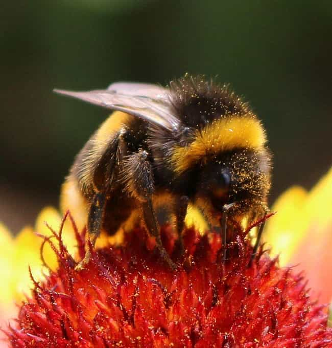 Bees Detect Explosives I... is listed (or ranked) 1 on the list 13 Utterly Bizarre Times Animals Have Been Given Jobs In The Human World