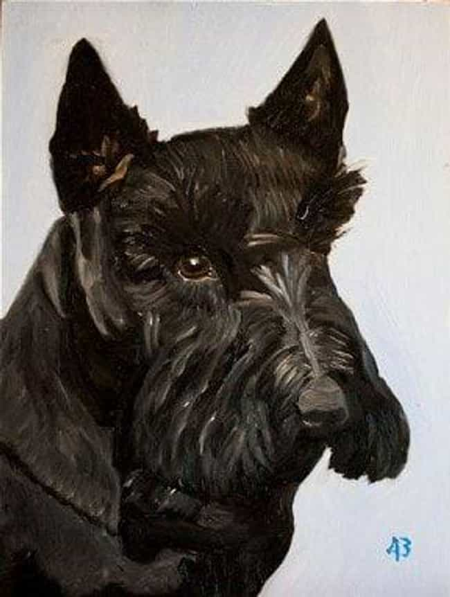 Bush's Dog, Barney is listed (or ranked) 2 on the list All 33 George W. Bush Original Paintings That Were Made Public