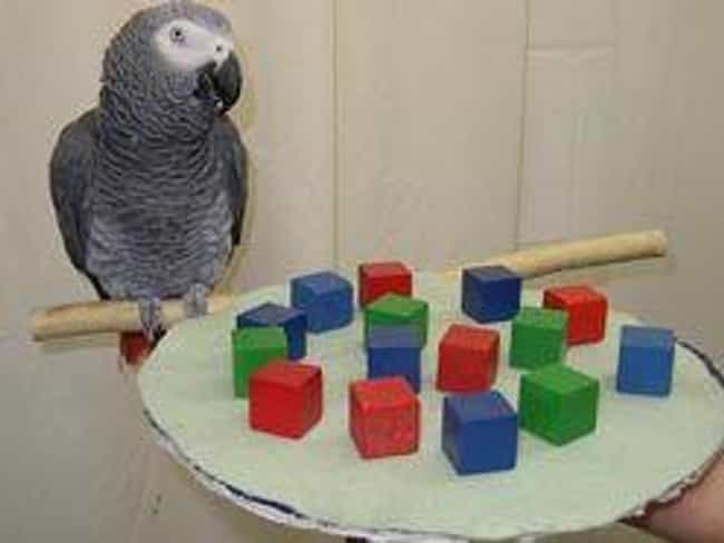 Dr. Irene Pepperberg Was... is listed (or ranked) 2 on the list Meet Alex The Parrot, The Bird With A Vocabulary Bigger Than Yours