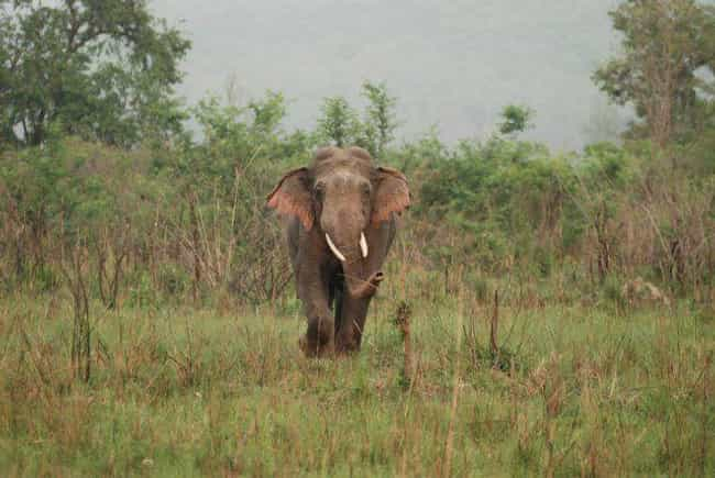 They Can Keep In Touch O... is listed (or ranked) 1 on the list Why Elephant Social Lives Are More Complex Than Ours