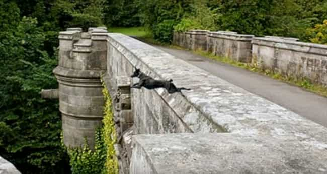 Dogs Just Jump Over For ... is listed (or ranked) 1 on the list Why Are Dogs Hurling Themselves Off The Mysterious Overtoun Bridge?