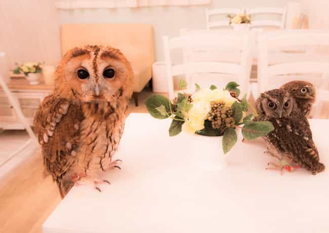 Akiba Fukurou Owl Cafe I... is listed (or ranked) 4 on the list The 14 Most Bizarre Cafés In The World