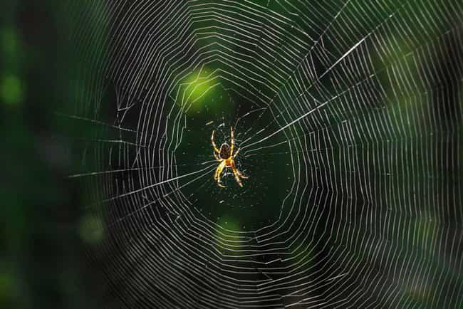 Spiders Weave Radioactiv... is listed (or ranked) 6 on the list 9 Fascinating Radioactive Animals That Exist As A Result Of Chernobyl