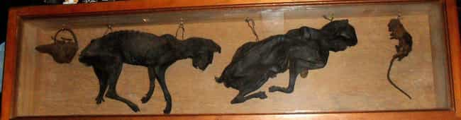 Dried Cat Corpses Keep E... is listed (or ranked) 1 on the list 12 Macabre Items Cultures Have Used To Ward Against Evil