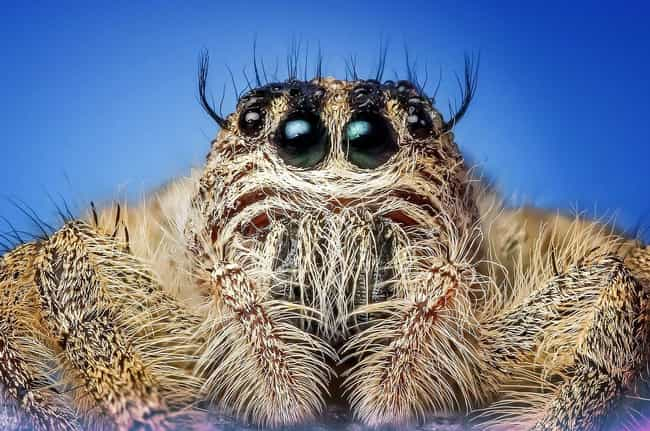 Spiders Make The Worst R... is listed (or ranked) 2 on the list Meet The Hannibal Lecters Of The Animal Kingdom