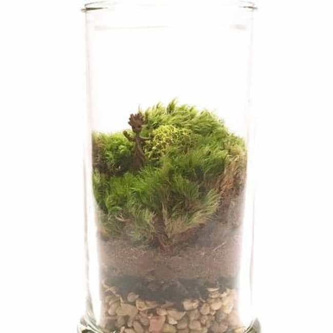 Baby Groot Moss Terrarium is listed (or ranked) 4 on the list 13 Perfectly Subtle Merch Ideas From Guardians Of The Galaxy Vol. 2