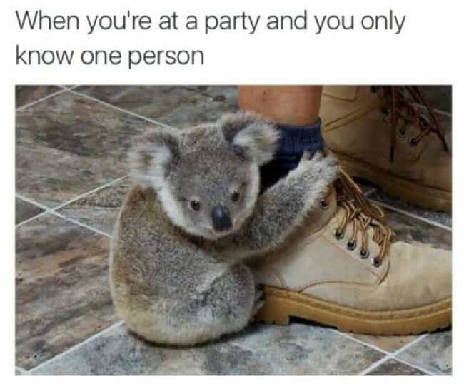 Party Animal is listed (or ranked) 1 on the list Memes All Socially Awkward People Understand Too Well