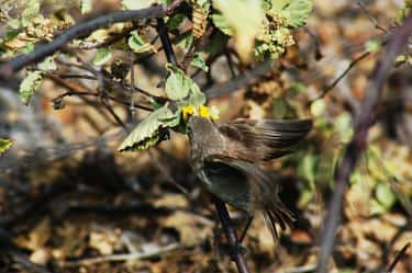 Vampire Finches Feast On The B is listed (or ranked) 2 on the list 15 Bizarre, Slightly Unsettling Animal Eating Habits