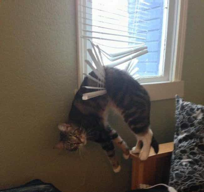 Blinds-Sided is listed (or ranked) 4 on the list 20+ Hilarious Pets Who Had No Idea You'd Be Home This Early