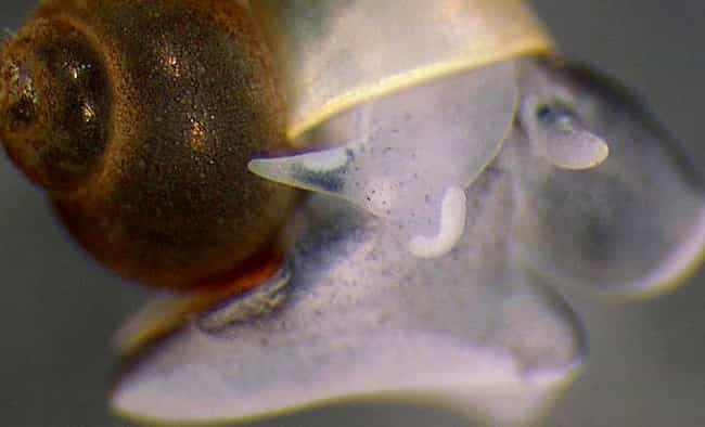 Phantom Cave Snail Are Complet... is listed (or ranked) 4 on the list 15 Beyond Fascinating Adaptations Of Cave-Dwelling Creatures