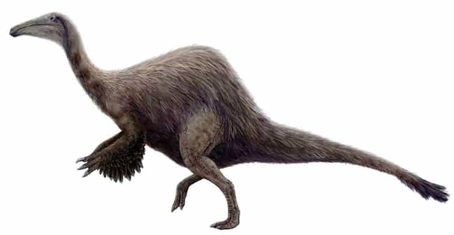Deinocheirus Mirificus W... is listed (or ranked) 4 on the list The Most Bizarre Dinosaurs That Ever Existed