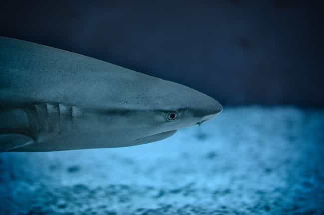 The Ampullae Of Lorenzini – A ... is listed (or ranked) 2 on the list These Incredible Abilities Give Sharks A Sixth (And Seventh) Sense