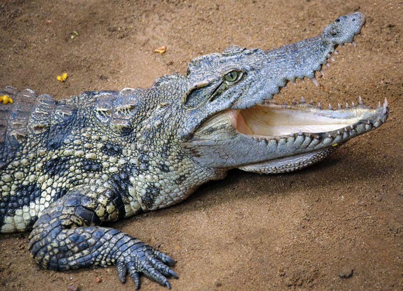 First, Yes, There Are Many Similarities Between Reptiles And Dinosaurs
