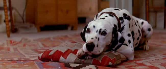 The Live Action 101 Dalmatians Is The Most Insane Fever Dream Of A Movie