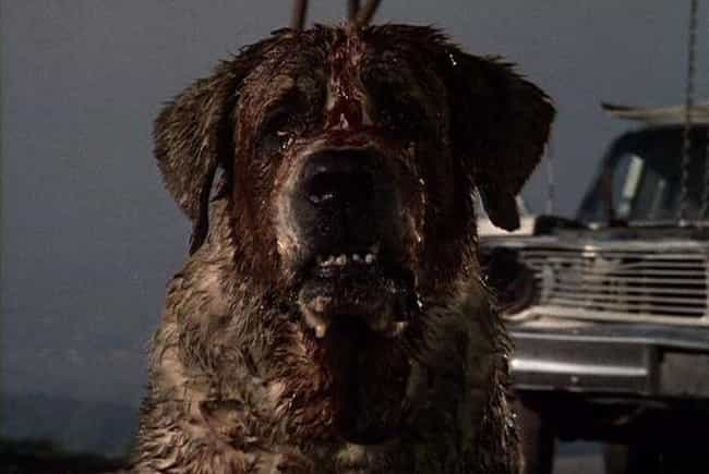 A Hungry Dog Made Smith ... is listed (or ranked) 4 on the list 14 Details About The Horrible Accident That Almost Killed Stephen King