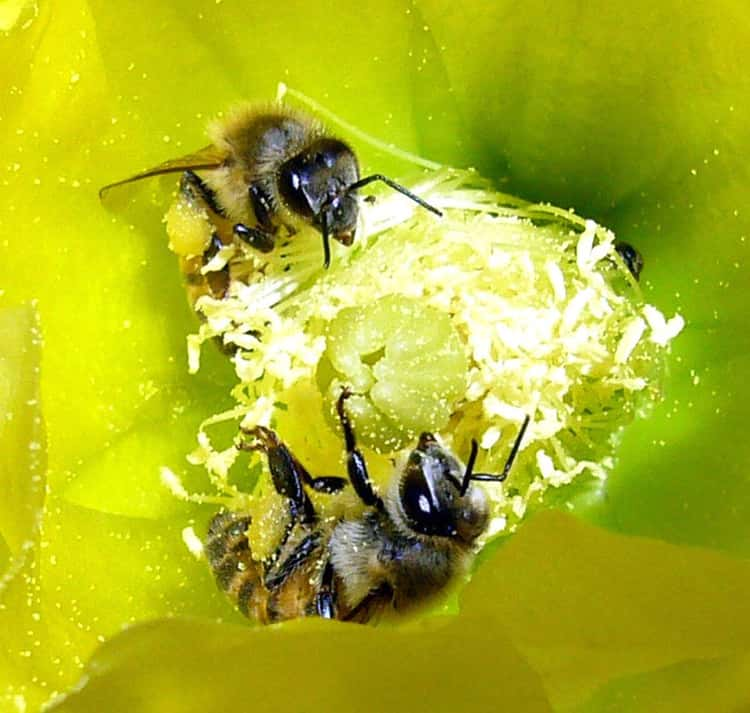 Here Are All The Things That Pollinators Do For Us