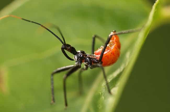 8 incredible facts about the assassin bug an aptly named insect