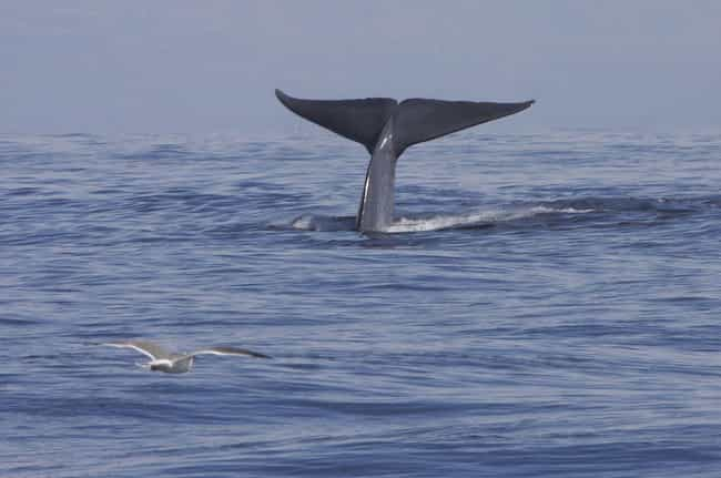 The Whale Passes Away is listed (or ranked) 1 on the list What Happens When Dead Whales Sink To The Bottom Of The Ocean