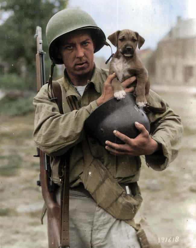 A Soldier's Best Friend is listed (or ranked) 4 on the list 23 Powerful Colorized Photographs From World War II