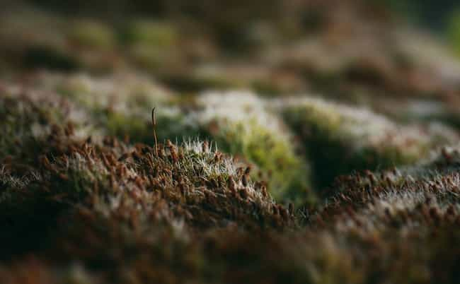 The First Land Plants We... is listed (or ranked) 1 on the list 13 Facts About Moss That Make You Say, Woah - Really?