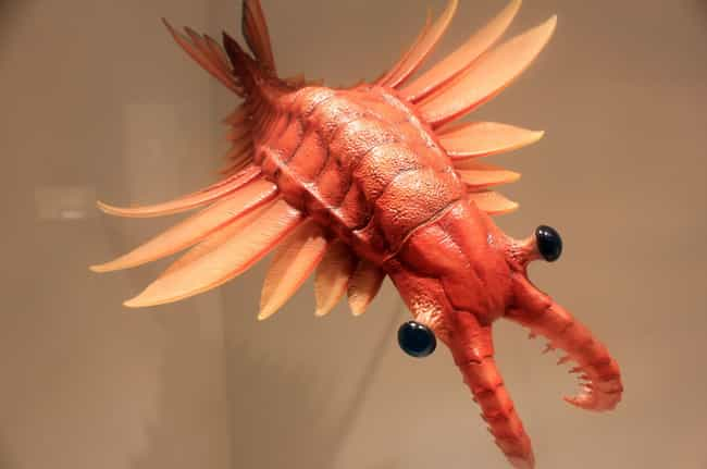 Anomalocaris Was A Terri... is listed (or ranked) 1 on the list 11 Borderline Horrifying Prehistoric Creatures That Lived 500 Million Years Ago