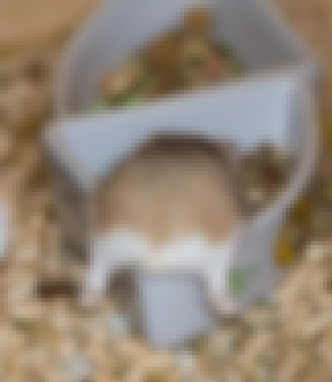 Hungry Hamster Butt is listed (or ranked) 3 on the list Cute Lil' Animal Butts You've Never Even Seen