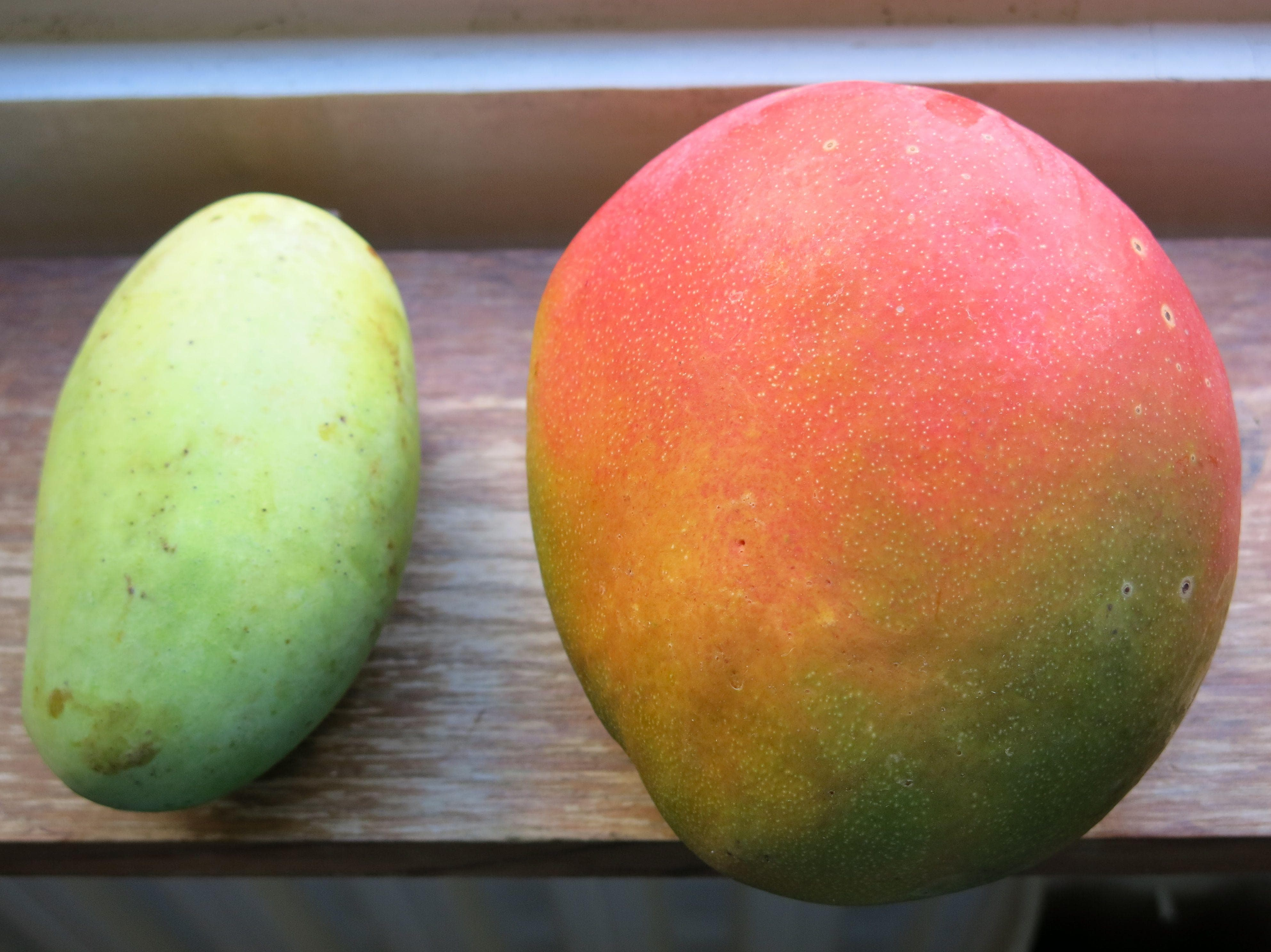 Domesticated Mangoes Are Supersized on Random Pics Of Common Fruits As You Know Them Compared To Their Undomesticated Forms