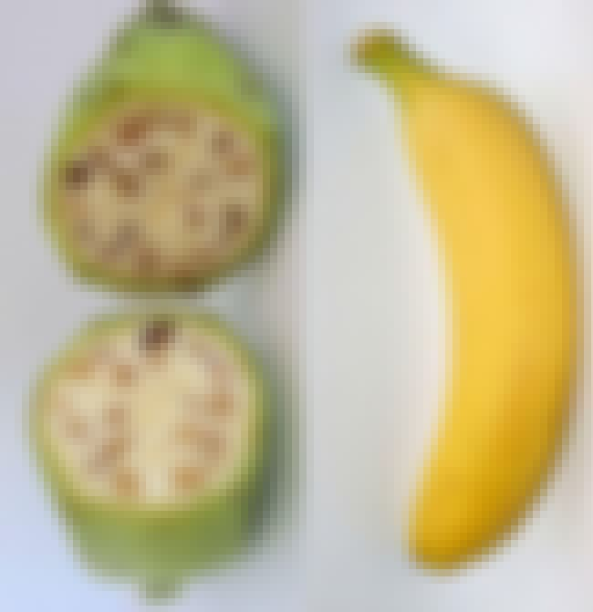Bananas Had Large, Hard Seeds is listed (or ranked) 4 on the list 20 Pics Of Common Fruits As You Know Them Compared to Their Undomesticated Forms