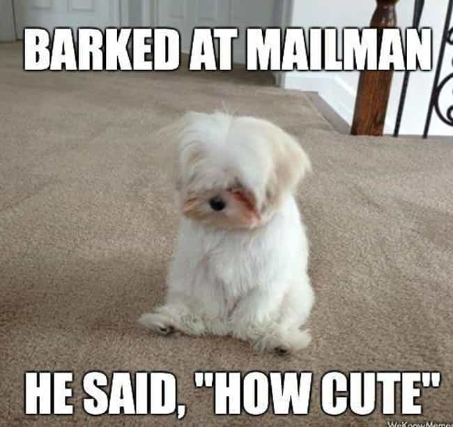 How Cute! is listed (or ranked) 2 on the list 25 Hilarious Photos Of Pets Who Are Adorably Upset