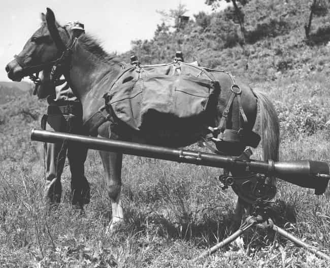 Sergeant Reckless Served... is listed (or ranked) 2 on the list 13 Heroic Military Animals You Had No Idea Existed