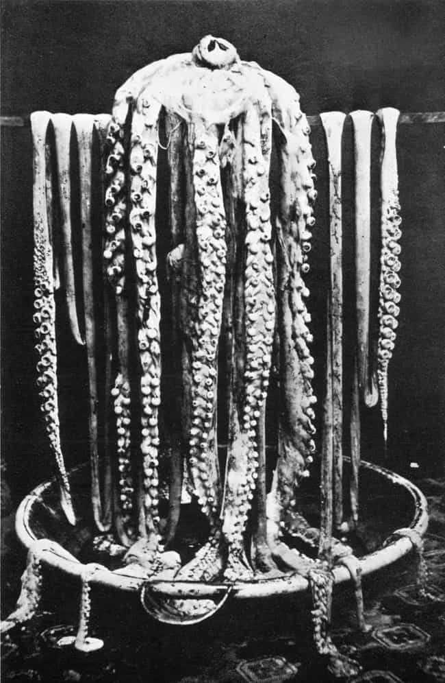 The Giant Squid Measures... is listed (or ranked) 2 on the list The Legend Of The Kraken Vs. The Actual Giant Squid
