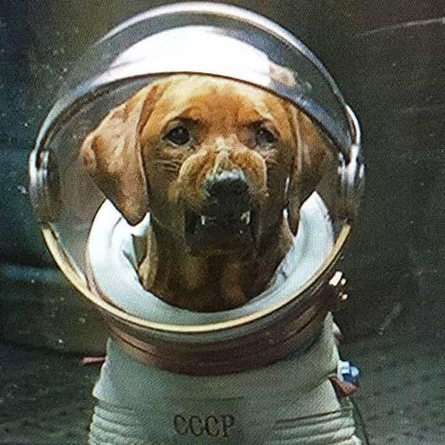 Tsygan And Dezik, The Su... is listed (or ranked) 3 on the list Unknowingly Heroic Animals Who Explored The Final Frontier During The Space Race