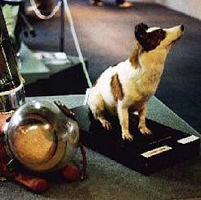 Belka And Strelka, The S... is listed (or ranked) 4 on the list Unknowingly Heroic Animals Who Explored The Final Frontier During The Space Race
