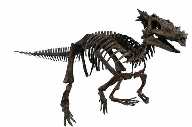 Dracorex Hogwartsia Got Its Na... is listed (or ranked) 1 on the list Meet Dracorex Hogwartsia, The Most Amazing Dinosaur You've Never Heard Of